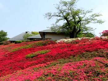 DIC川村記念美術館2845.jpg