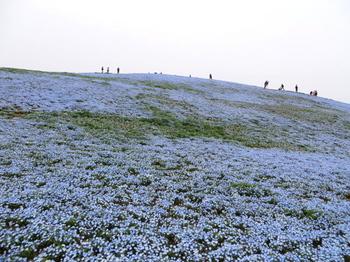 ひたち海浜公園0976.jpg
