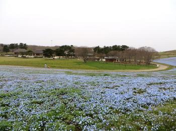 ひたち海浜公園0984.jpg