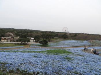 ひたち海浜公園0991.jpg