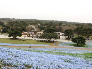 ひたち海浜公園0992.jpg