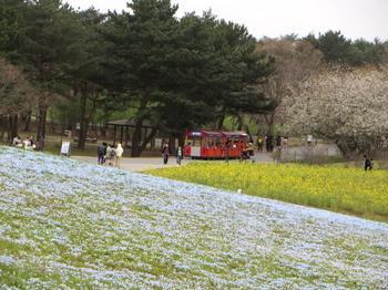 ひたち海浜公園1081.jpg