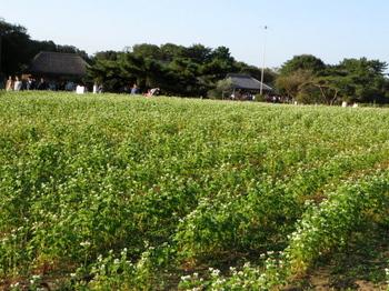ひたち海浜公園6402.jpg