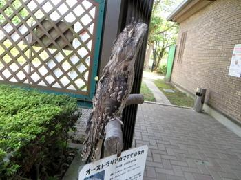 キャンベルタウン野鳥の森5590.jpg