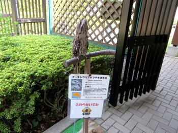 キャンベルタウン野鳥の森5591.jpg