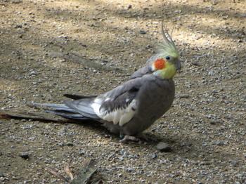 キャンベルタウン野鳥の森5595.jpg