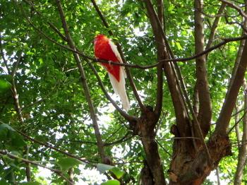 キャンベルタウン野鳥の森5599.jpg