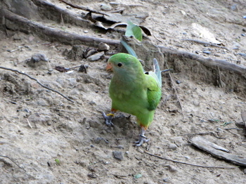 キャンベルタウン野鳥の森5607.jpg
