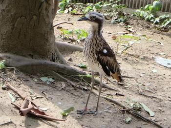 キャンベルタウン野鳥の森5612.jpg