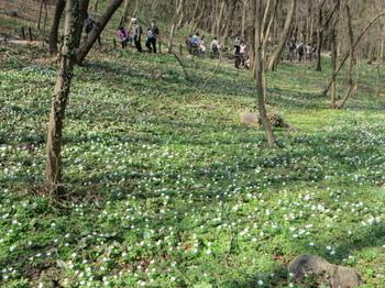 万葉自然公園6982.jpg