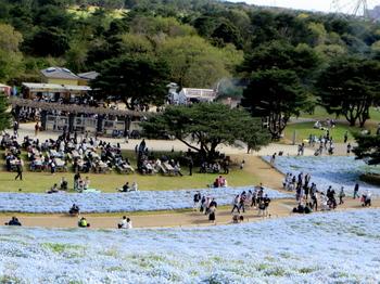 国営ひたち海浜公園8122.jpg