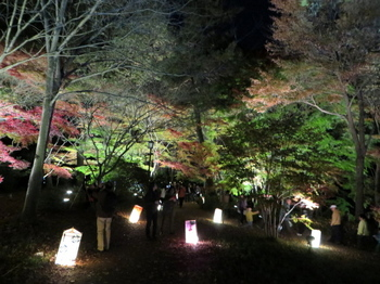 国営武蔵丘陵森林公園7596.jpg