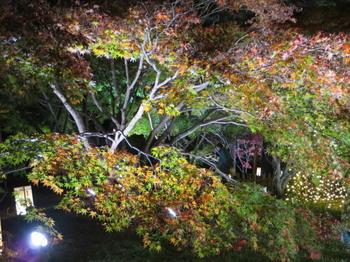 国営武蔵丘陵森林公園7603.jpg