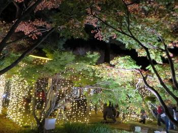 国営武蔵丘陵森林公園7605.jpg