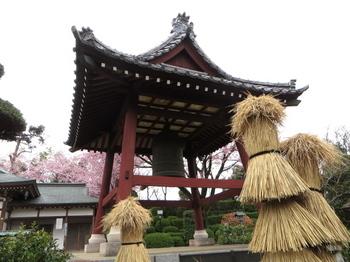 安行桜1361.jpg