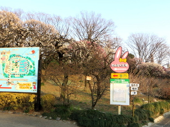 川口市立グリーンセンター1225.jpg