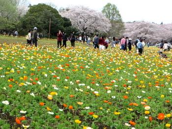 昭和記念公園0774.jpg