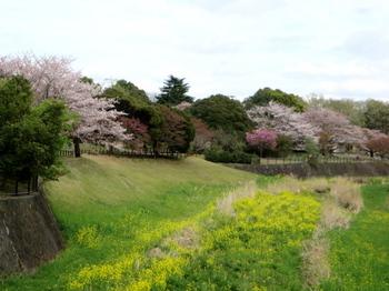 昭和記念公園1796.jpg