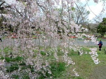 昭和記念公園1819.jpg