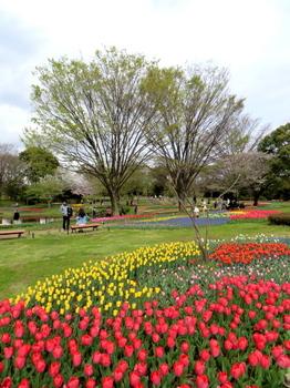 昭和記念公園1833.jpg