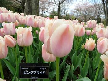 昭和記念公園1843.jpg