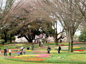 昭和記念公園1863.jpg