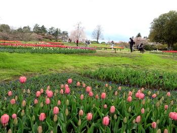 昭和記念公園1866.jpg