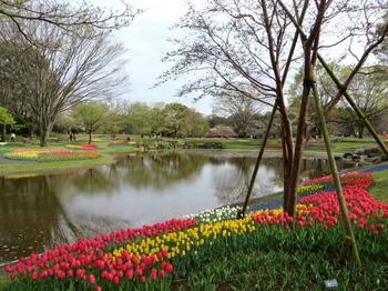 昭和記念公園1911.jpg