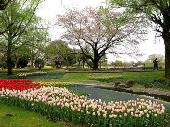 昭和記念公園1941.jpg