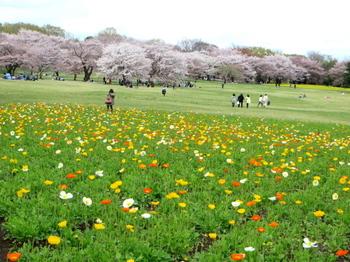 昭和記念公園1963.jpg