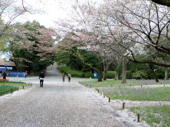 昭和記念公園1969.jpg