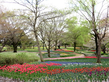 昭和記念公園1974.jpg