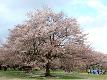 昭和記念公園1976.jpg