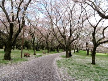昭和記念公園1982.jpg