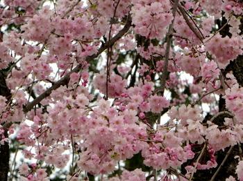 昭和記念公園2001.jpg