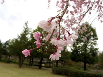 昭和記念公園2004.jpg