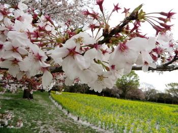 昭和記念公園2056.jpg