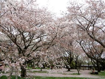 昭和記念公園2062.jpg