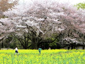 昭和記念公園2085.jpg