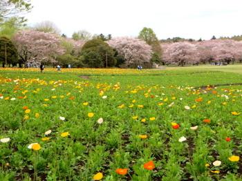 昭和記念公園2097.jpg