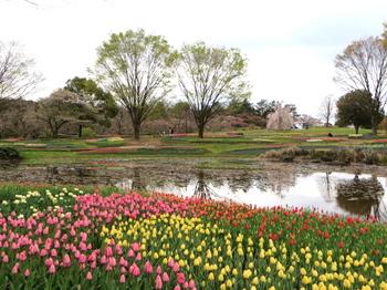 昭和記念公園2134.jpg