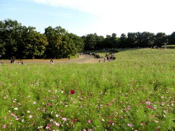 昭和記念公園5981.jpg