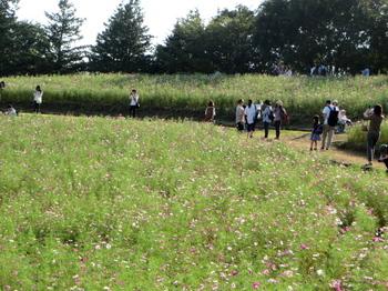 昭和記念公園5982.jpg