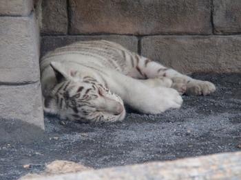 東武動物公園0092.jpg