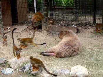 東武動物公園0315.jpg