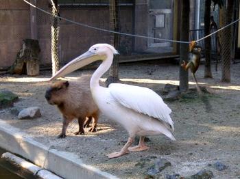 東武動物公園0513.jpg