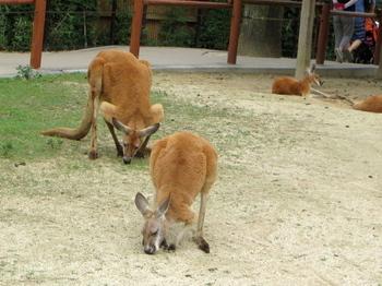 東武動物公園4376.jpg