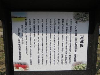 権現堂堤6487.jpg