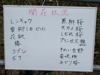 花の山0394.jpg
