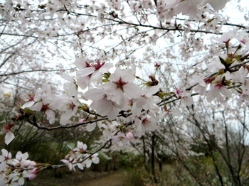 花の山0434.jpg